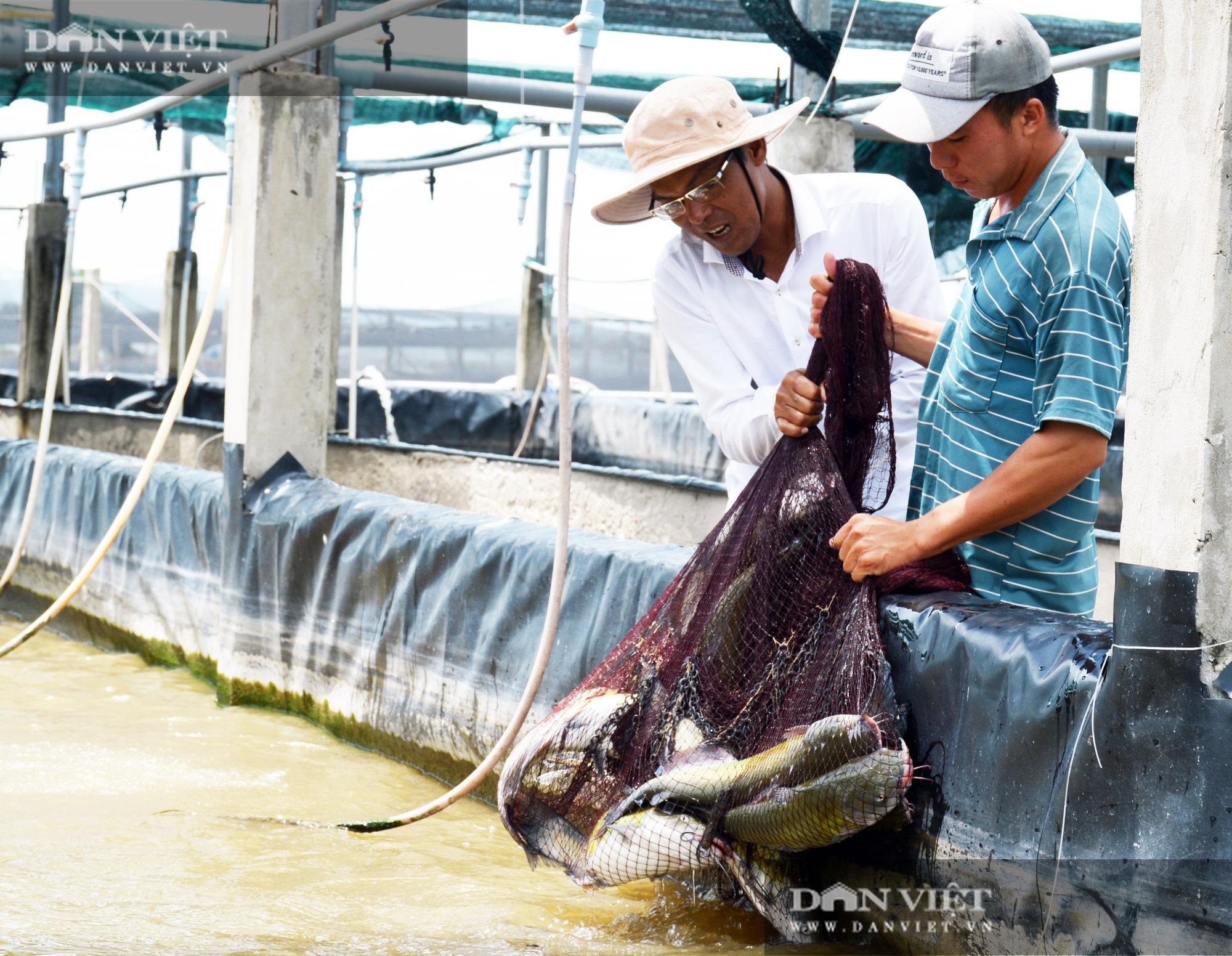 Bạc Liêu: Chàng kỹ sư bỏ công ty nước ngoài về làm nông dân nuôi 15 loài thủy sản - Ảnh 1.
