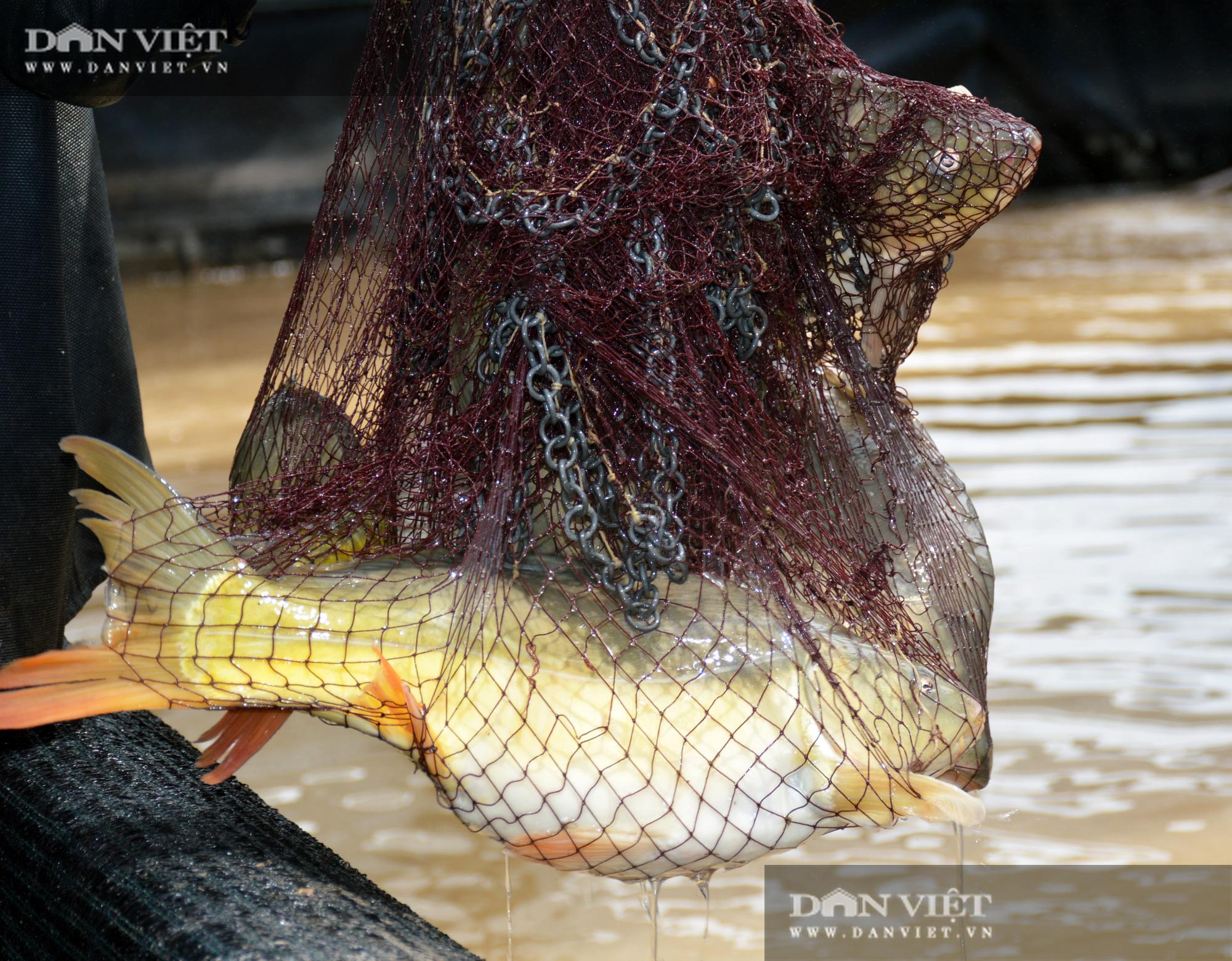 Bạc Liêu: Chàng kỹ sư bỏ công ty nước ngoài về làm nông dân nuôi 15 loài thủy sản - Ảnh 4.