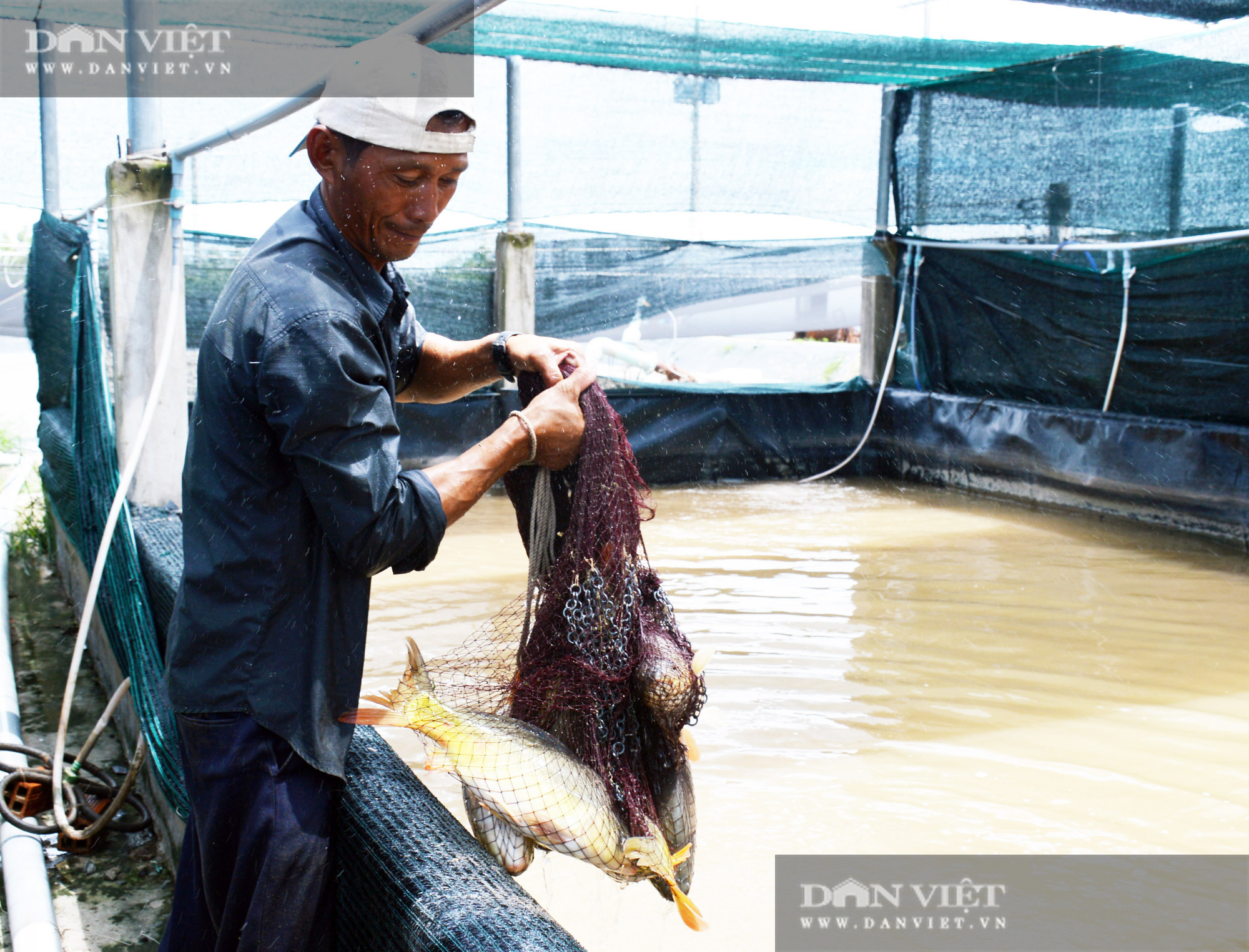 Bạc Liêu: Chàng kỹ sư bỏ công ty nước ngoài về làm nông dân nuôi 15 loài thủy sản - Ảnh 5.