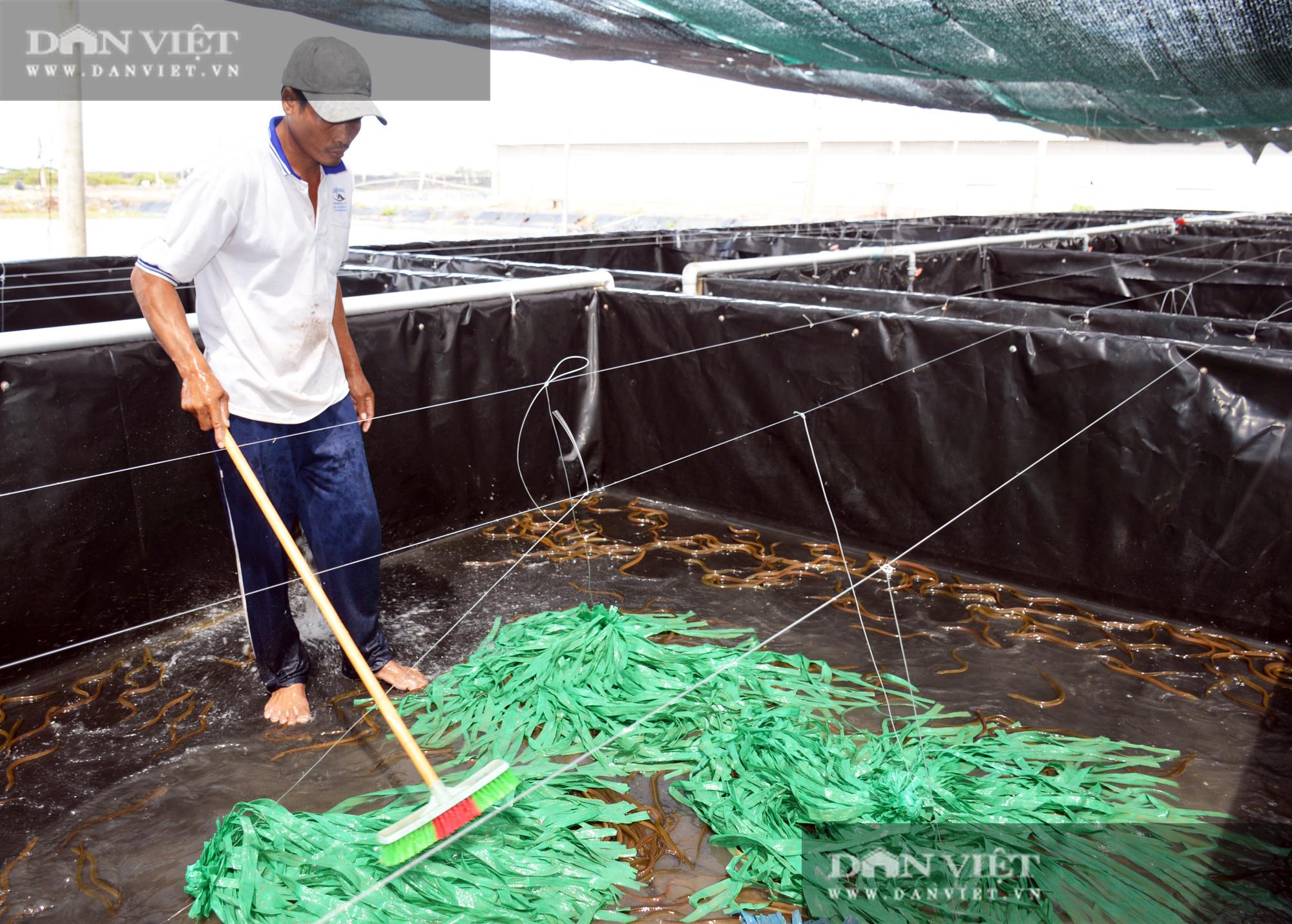 Bạc Liêu: Chàng kỹ sư bỏ công ty nước ngoài về làm nông dân nuôi 15 loài thủy sản - Ảnh 8.