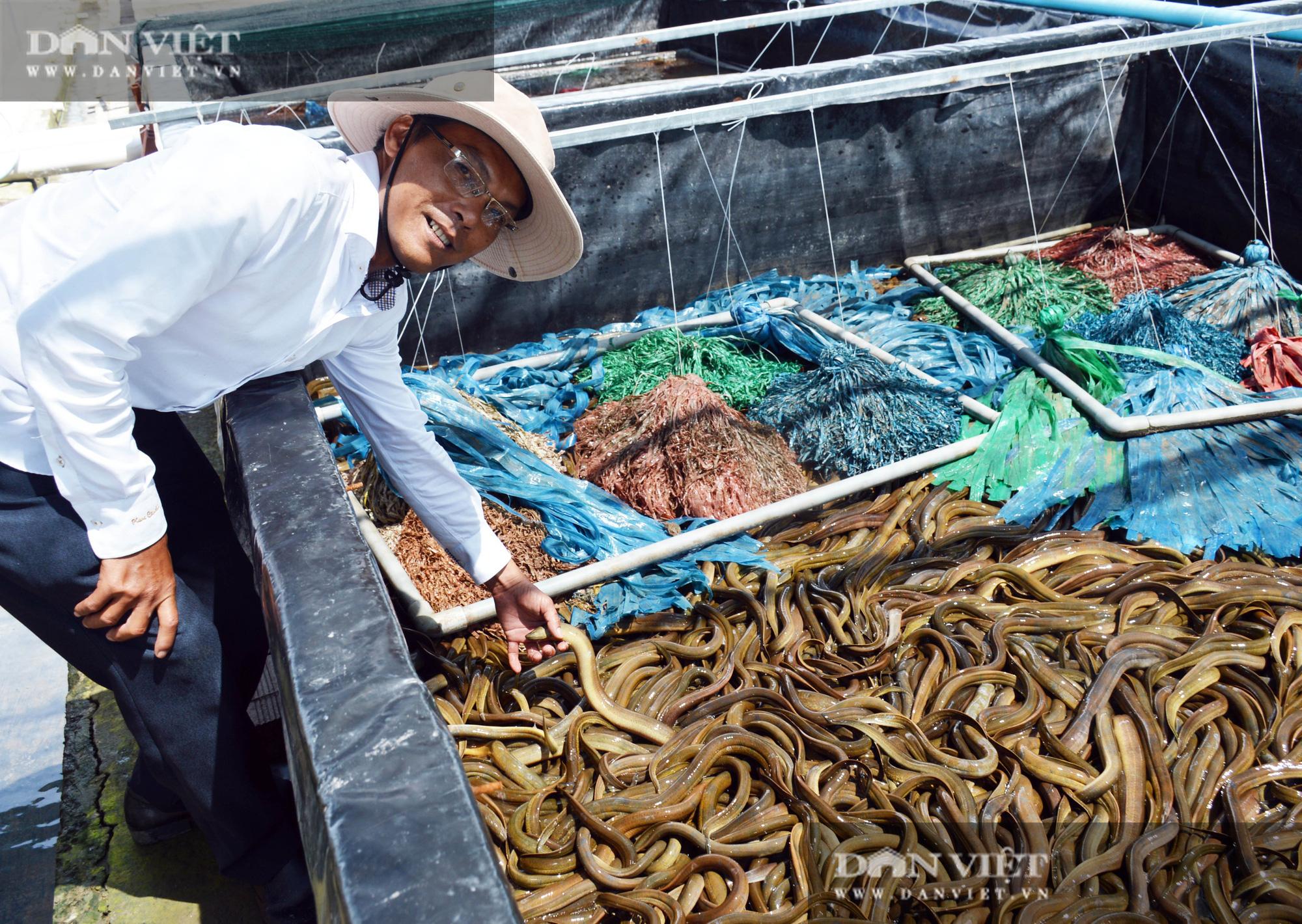Bạc Liêu: Chàng kỹ sư bỏ công ty nước ngoài về làm nông dân nuôi 15 loài thủy sản - Ảnh 11.