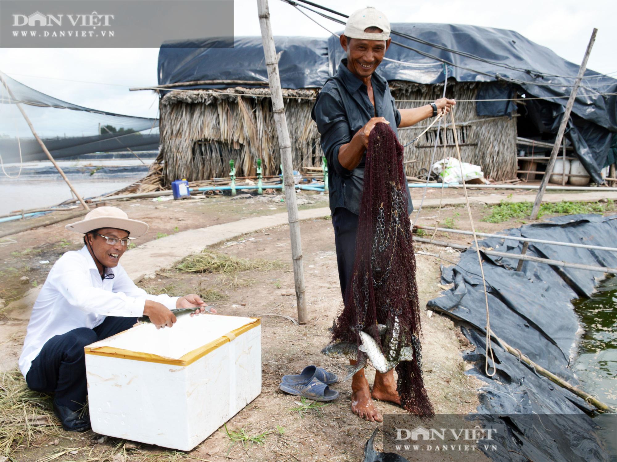 Bạc Liêu: Chàng kỹ sư bỏ công ty nước ngoài về làm nông dân nuôi 15 loài thủy sản - Ảnh 2.