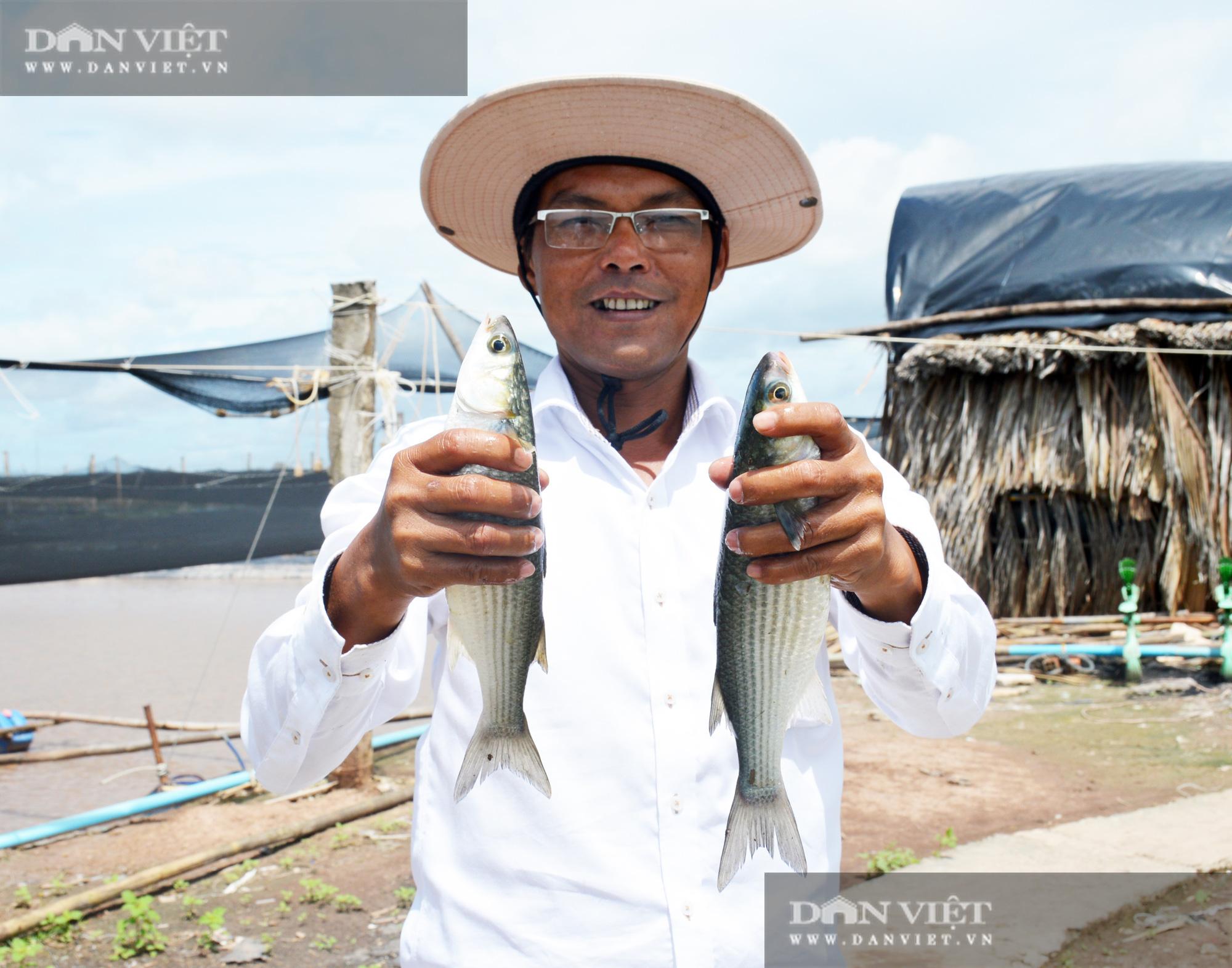 Bạc Liêu: Chàng kỹ sư bỏ công ty nước ngoài về làm nông dân nuôi 15 loài thủy sản - Ảnh 3.