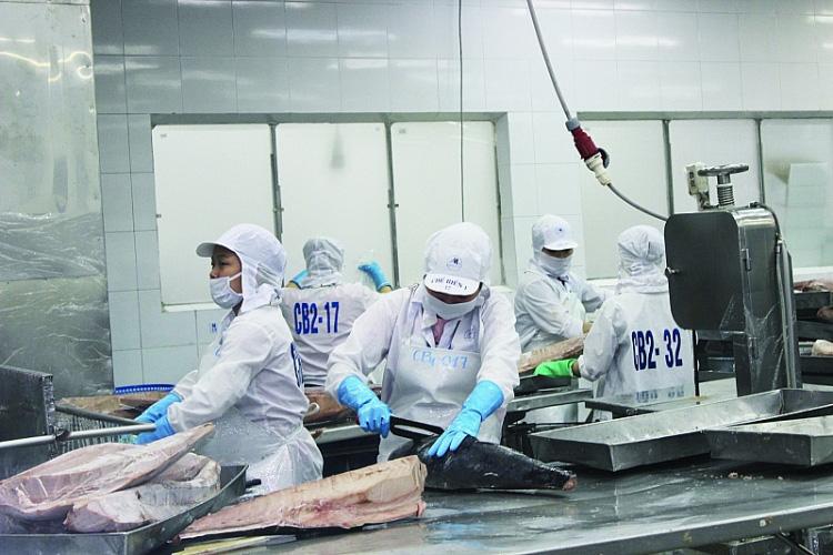 Xuất khẩu cá ngừ chế biến tăng đột biến - Ảnh 1.