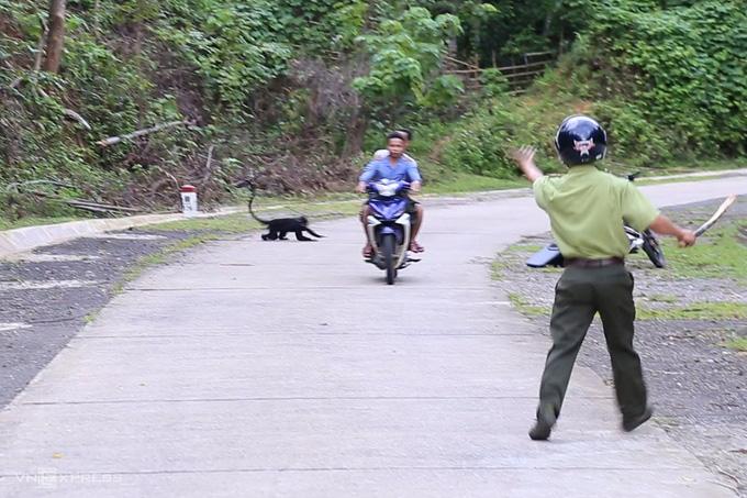 Quảng Trị: Đề nghị hỗ trợ 2 con chó nghiệp vụ xua đuổi đàn voọc từng tấn công 9 người ở đường quốc lộ - Ảnh 1.