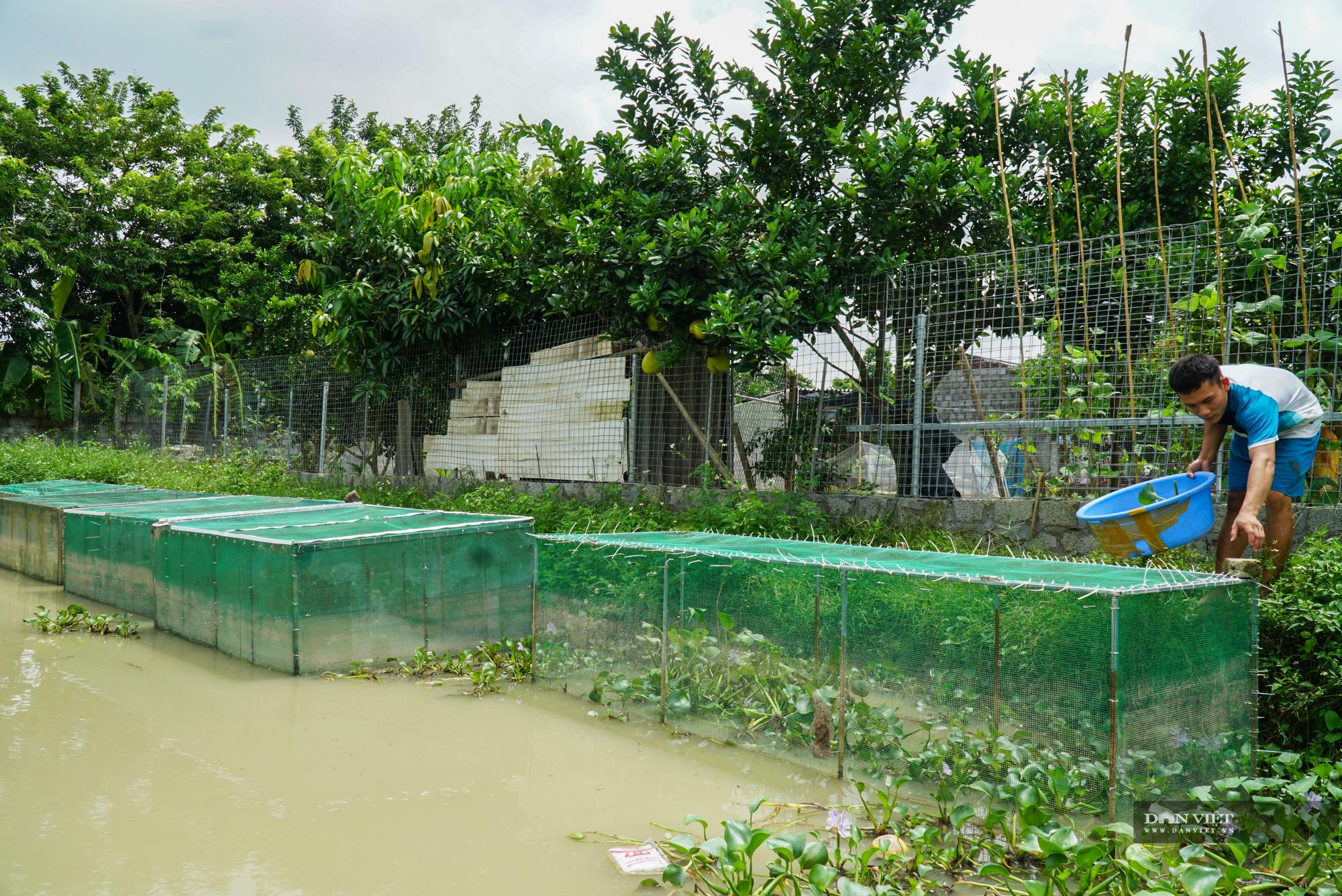 Trai xứ Thanh thu lãi hàng tỷ mỗi năm nhờ nuôi 5 loài ít khi bị mắc bệnh - Ảnh 19.