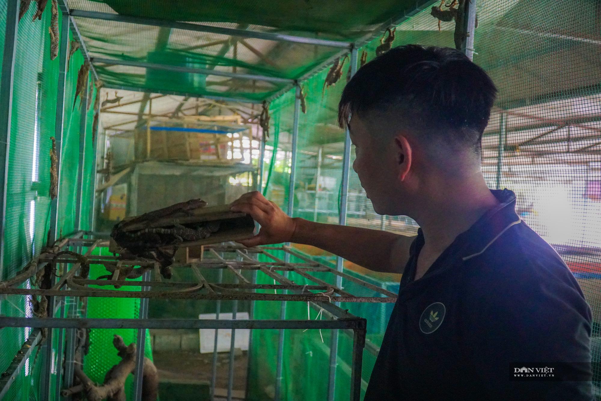Trai xứ Thanh thu lãi hàng tỷ mỗi năm nhờ nuôi 5 loài ít khi bị mắc bệnh - Ảnh 8.