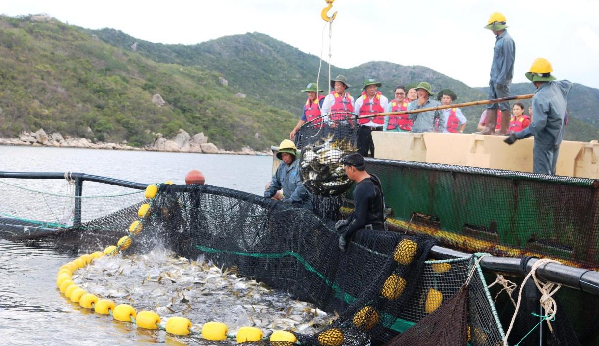 Kim ngạch xuất khẩu, thủy sản Việt Nam đứng thứ 3 thế giới - Ảnh 2.