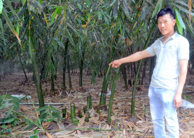 Tỷ phú nông dân rủ cả làng làm giàu bằng cách trồng bạt ngàn tre lấy măng - Ảnh 1.