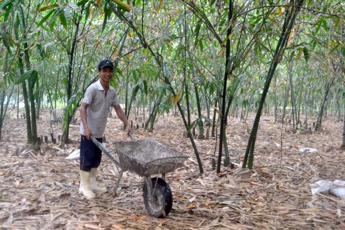 Tỷ phú nông dân rủ cả làng làm giàu bằng cách trồng bạt ngàn tre lấy măng - Ảnh 2.