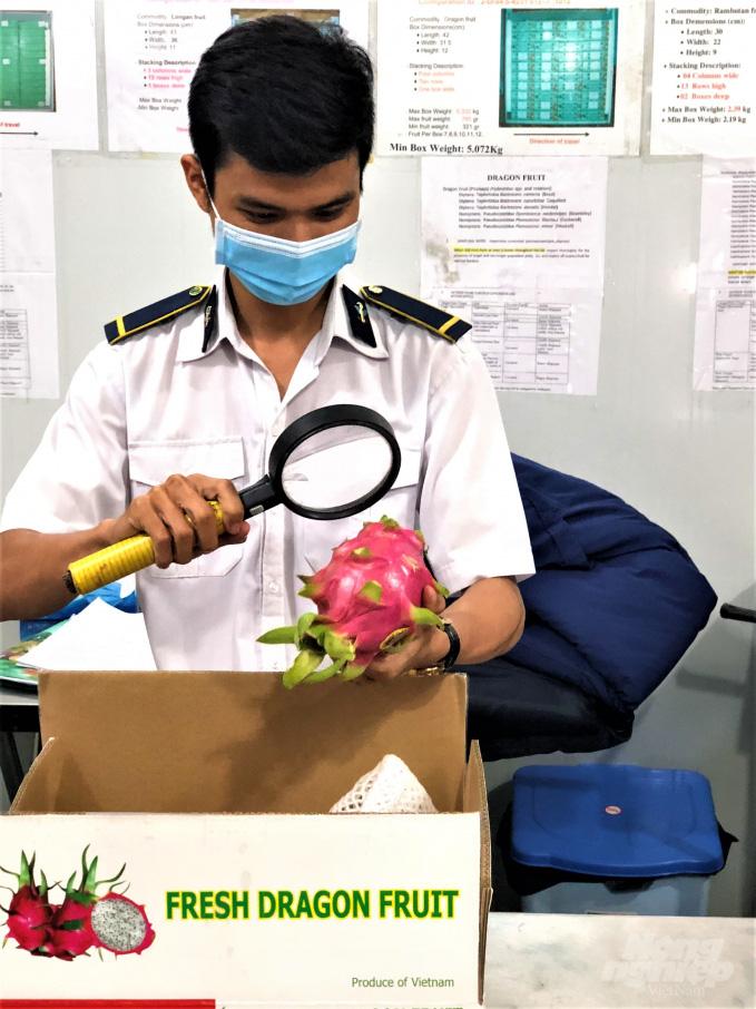 Trái cây tươi Việt Nam xuất khẩu bình thường trở lại thị trường Hoa Kỳ - Ảnh 3.