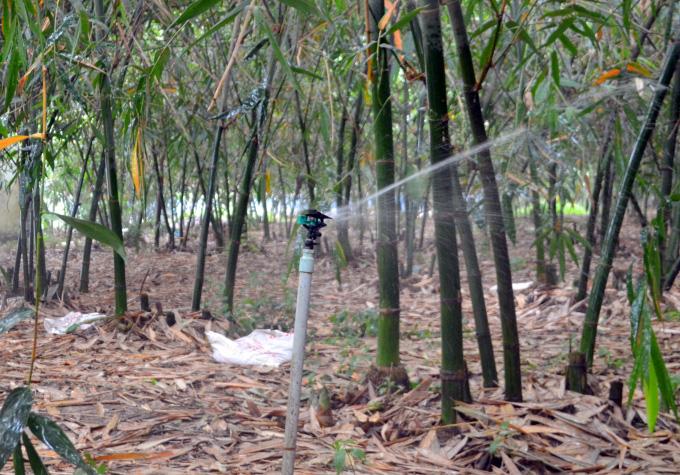 Tỷ phú nông dân rủ cả làng làm giàu bằng cách trồng bạt ngàn tre lấy măng - Ảnh 3.