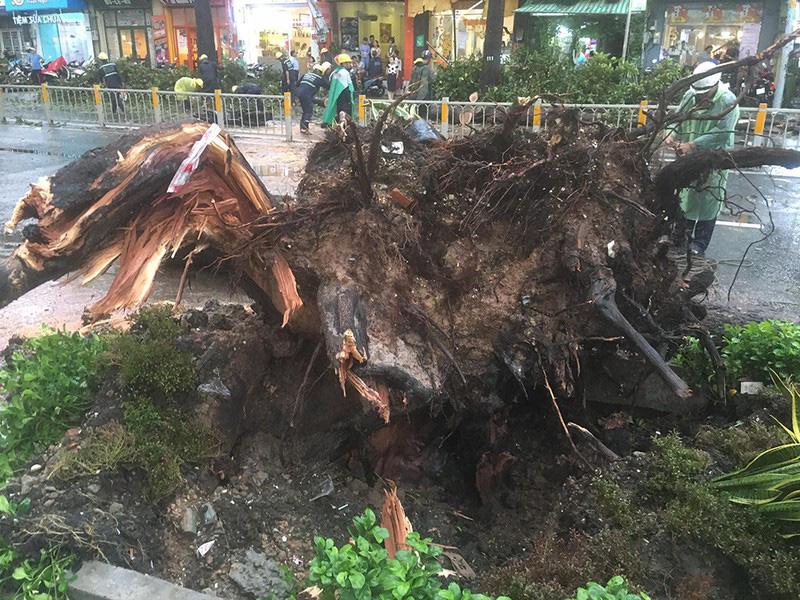 Người bị cây dầu ở đường Nguyễn Tri Phương đè đã tử vong - Ảnh 1.