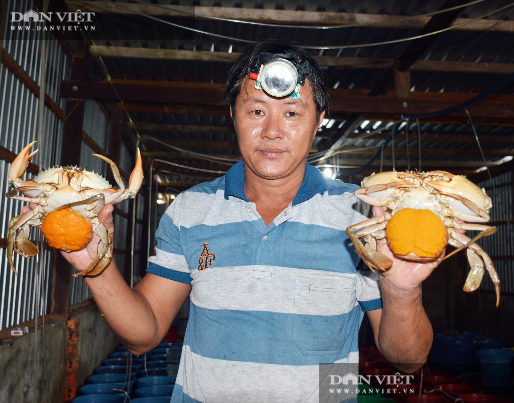 """Nuôi tôm hung dữ, bắt cá leo cây, và cơ man đặc sản """"độc, lạ"""" ở tỉnh Cà Mau, nhìn thôi đã thấy thèm Logo-logo-3-1601050516508532279312"""