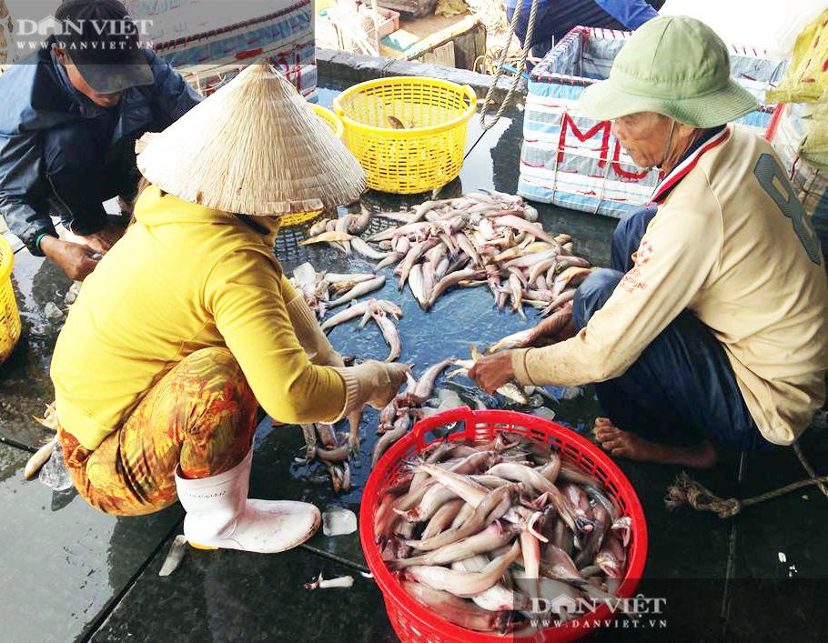 """Nuôi tôm hung dữ, bắt cá leo cây, và cơ man đặc sản """"độc, lạ"""" ở tỉnh Cà Mau, nhìn thôi đã thấy thèm Logo-logo-anh-11-1601050522150399179497"""
