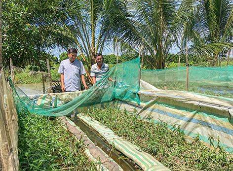 Hậu Giang: Nông dân rủ nhau làm chuồng nuôi lươn đồng, bán lươn giá cao mà nhà nào cũng khá giả - Ảnh 1.