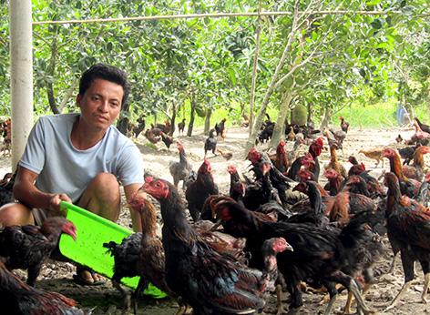 Hậu Giang: Tiếc vườn nhà bỏ hoang, anh nông dân mua gà ta về thả, ai ngờ giờ là tỷ phú - Ảnh 1.