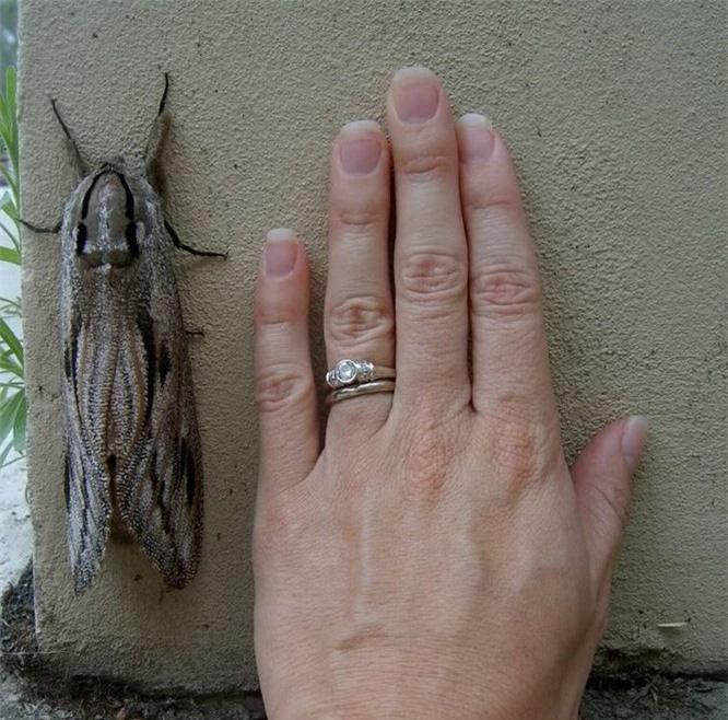 """15 con vật kỳ dị nhưng có thật: Cá có cánh, sâu bướm đầu rồng, loài cá trông như """"quái vật"""" - Ảnh 3."""
