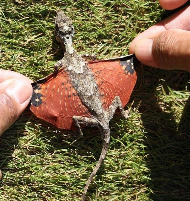 """15 con vật kỳ dị nhưng có thật: Cá có cánh, sâu bướm đầu rồng, loài cá trông như """"quái vật"""" - Ảnh 8."""