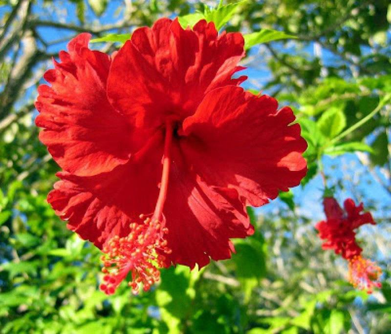 5 loại cây, hoa phá vỡ phong thủy, đặt trong nhà sẽ khiến gia chủ lục đục, vận thế sa sút - Ảnh 1.
