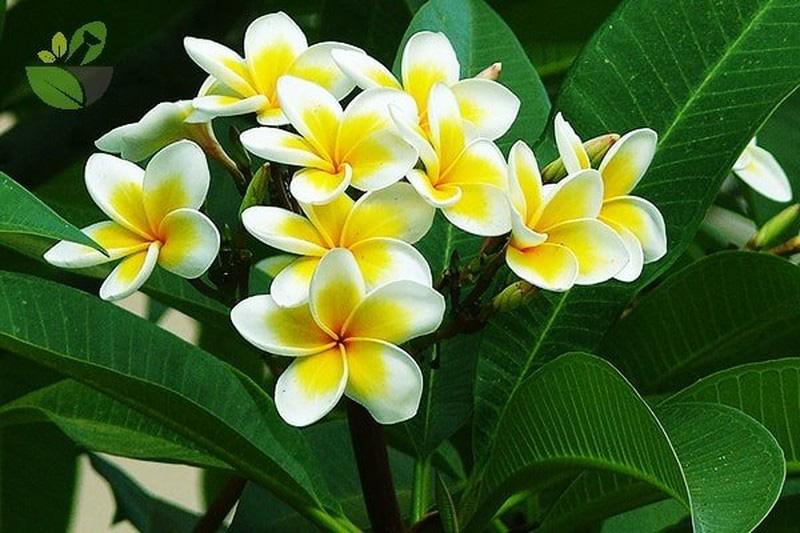 5 loại cây, hoa phá vỡ phong thủy, đặt trong nhà sẽ khiến gia chủ lục đục, vận thế sa sút - Ảnh 2.