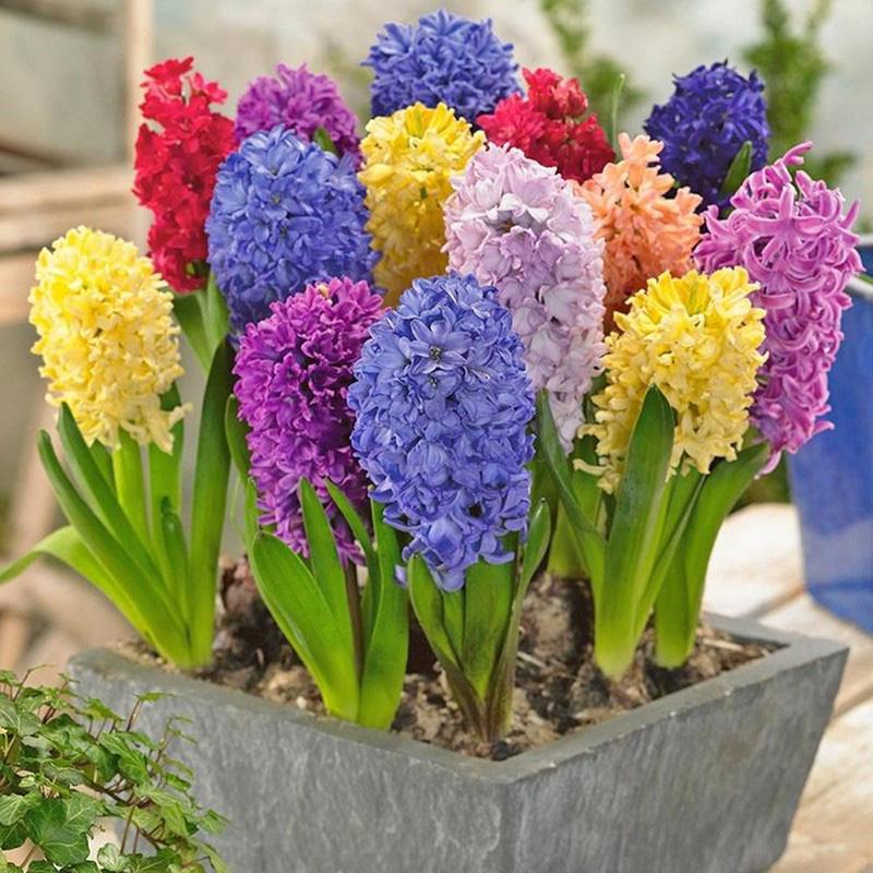 5 loại cây, hoa phá vỡ phong thủy, đặt trong nhà sẽ khiến gia chủ lục đục, vận thế sa sút - Ảnh 3.