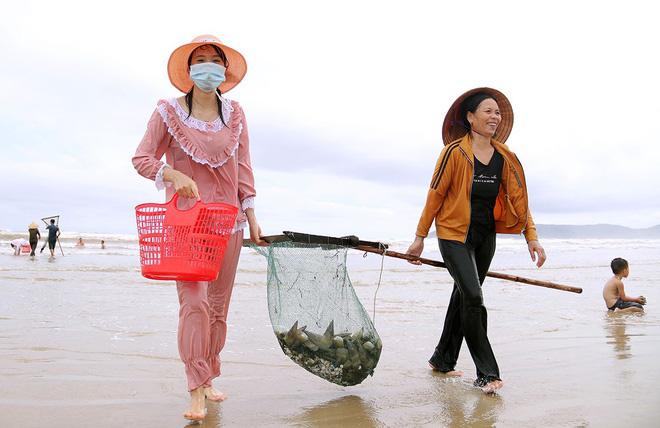 Vì sao ốc dạt vào bờ biển Quảng Bình dày đặc? - Ảnh 2.