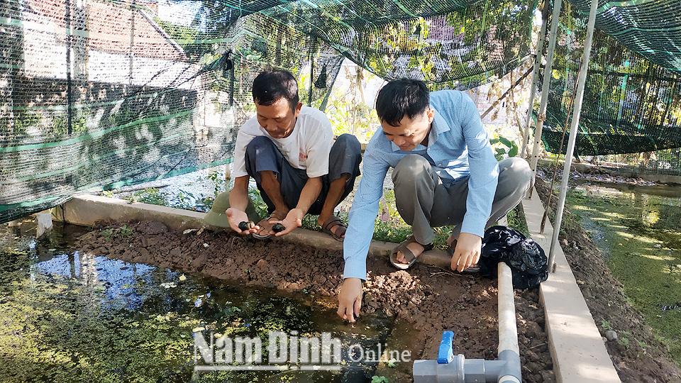 Nam Định: Vùng đất chiêm trũng dân đổi đời nhờ nuôi con đặc sản cực sợ thuốc trừ sâu, bắt bán đắt tiền - Ảnh 1.