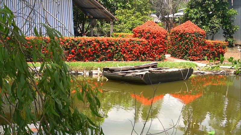 Kiên Giang: Chiêm ngưỡng ngôi nhà quê với hàng rào độc khiến thị dân chỉ biết ước - Ảnh 1.