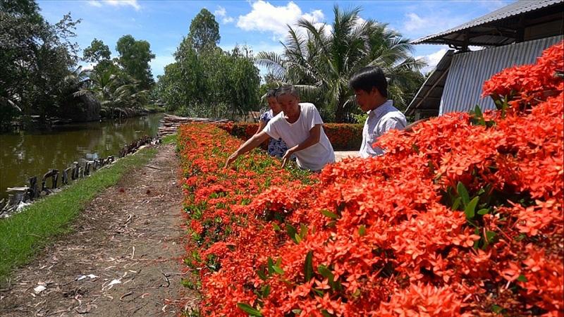 Kiên Giang: Chiêm ngưỡng ngôi nhà quê với hàng rào độc khiến thị dân chỉ biết ước - Ảnh 4.