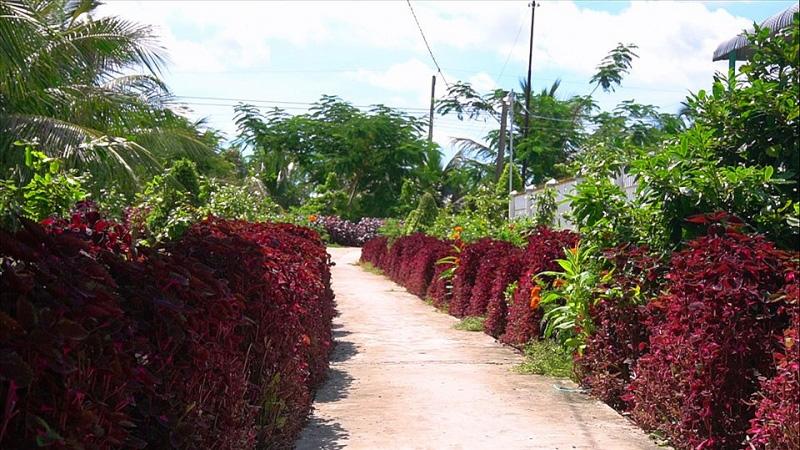 Kiên Giang: Chiêm ngưỡng ngôi nhà quê với hàng rào độc khiến thị dân chỉ biết ước - Ảnh 7.