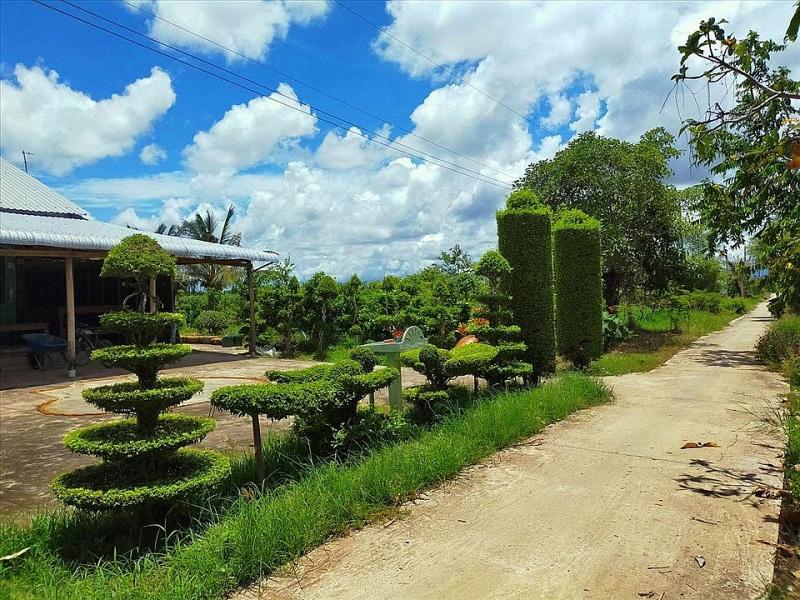 Kiên Giang: Chiêm ngưỡng ngôi nhà quê với hàng rào độc khiến thị dân chỉ biết ước - Ảnh 9.