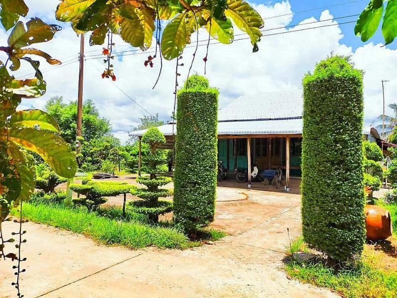 Kiên Giang: Chiêm ngưỡng ngôi nhà quê với hàng rào độc khiến thị dân chỉ biết ước - Ảnh 10.