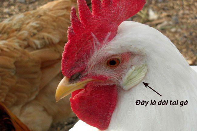Vì sao trứng gà có hai màu và lý do thật bất ngờ - Ảnh 2.