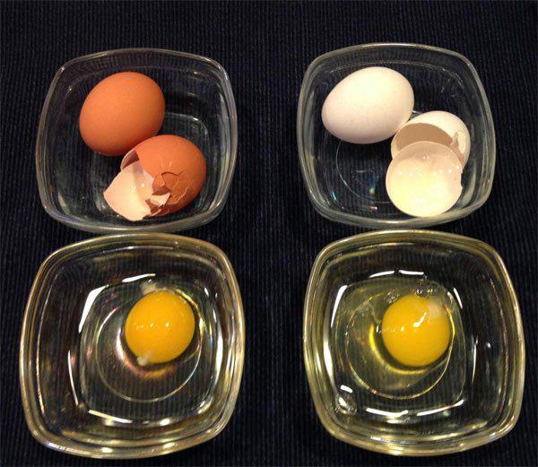Vì sao trứng gà có hai màu và lý do thật bất ngờ - Ảnh 3.