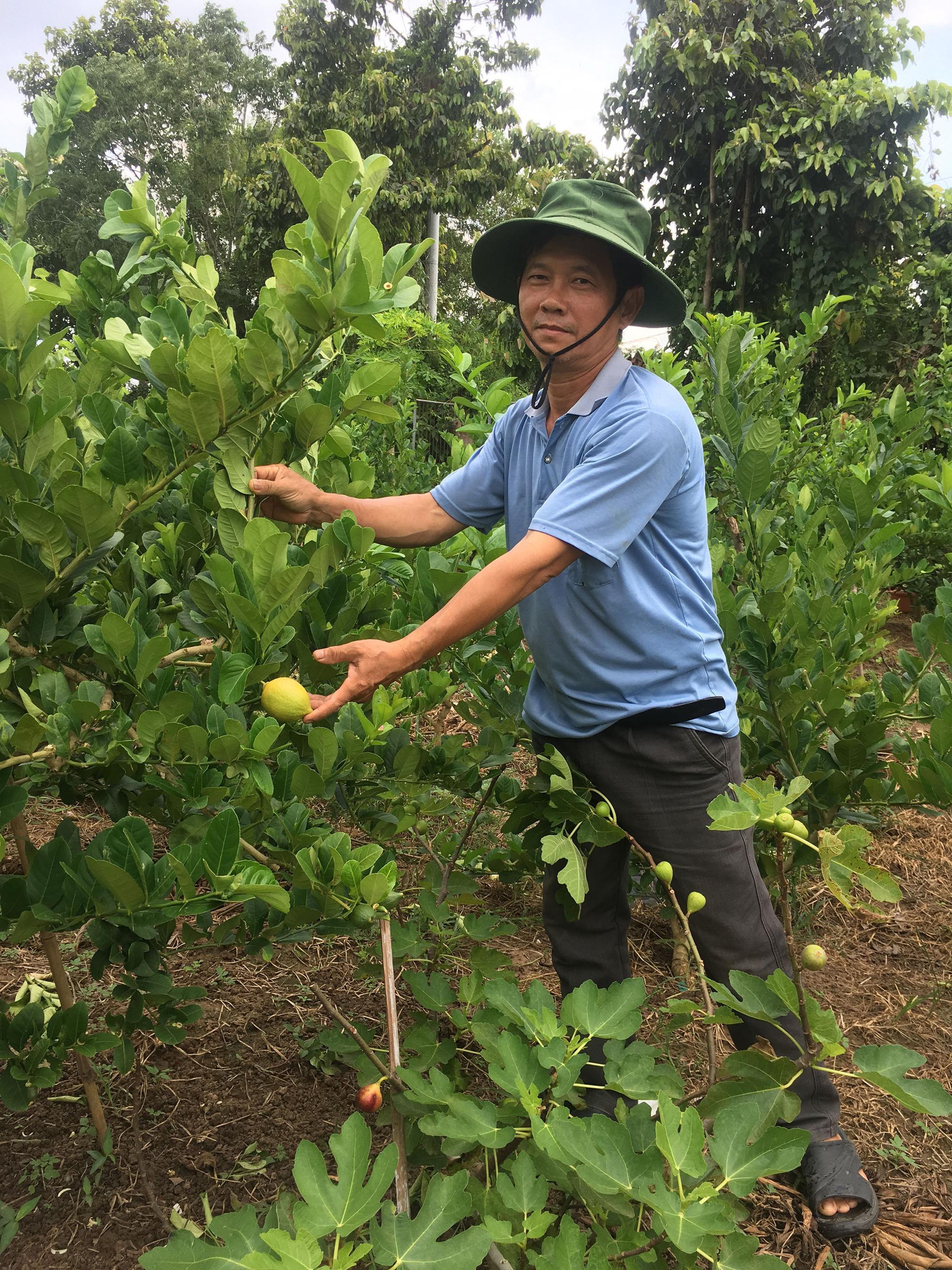 Vũng Tàu: Vì đam mê ông nông dân trồng cây lạ mà lãi lớn, hàng xóm kéo sang ầm ầm xin học theo - Ảnh 1.