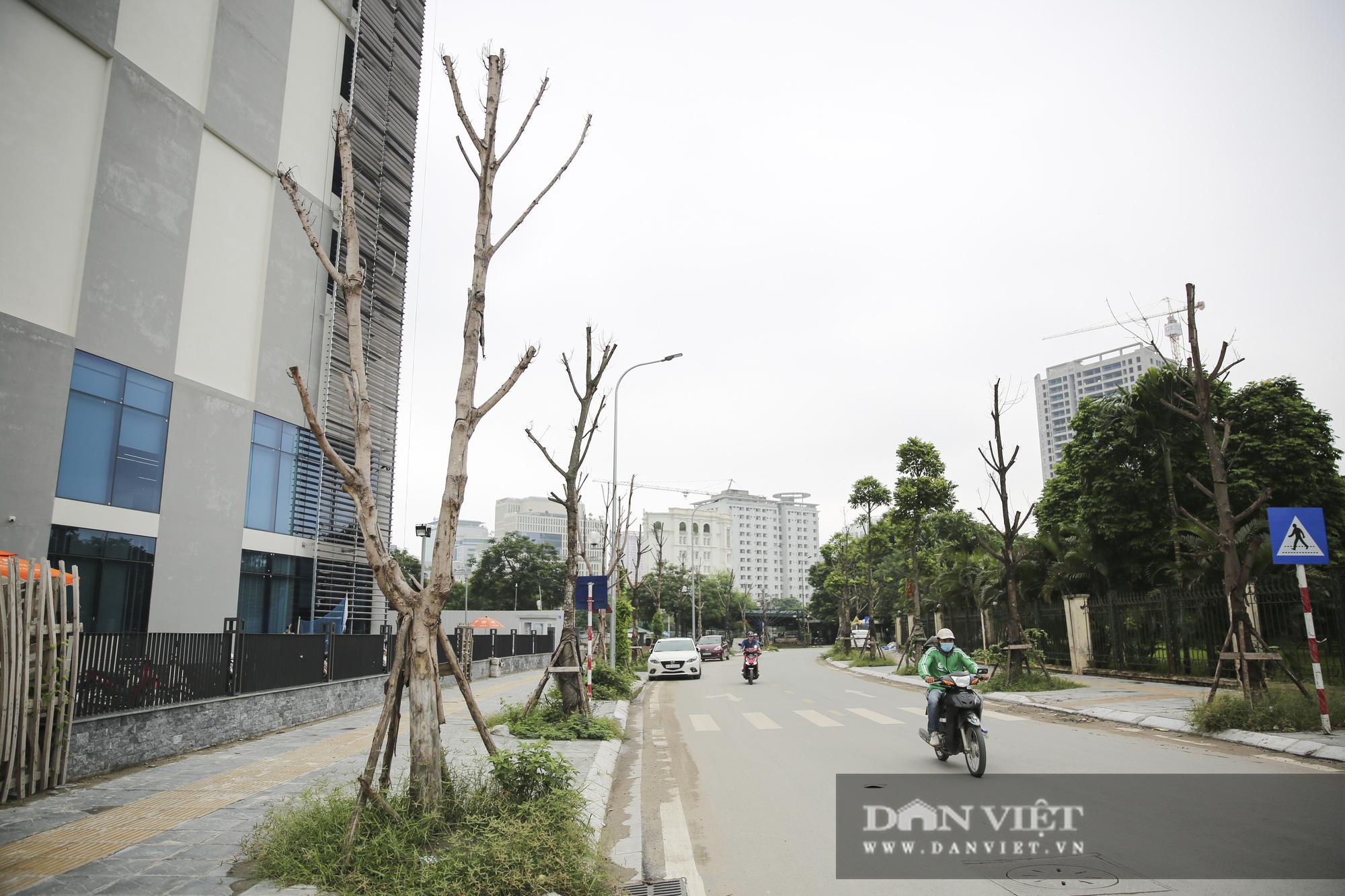 Hà Nội: Nhiều cây xanh trồng mới có dấu hiệu chết khô  - Ảnh 1.