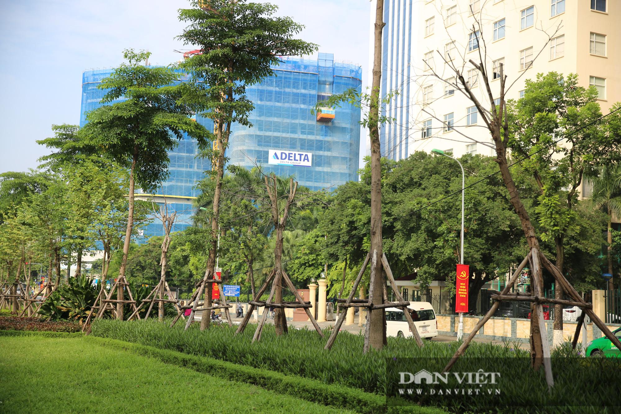 Hà Nội: Nhiều cây xanh trồng mới có dấu hiệu chết khô  - Ảnh 11.