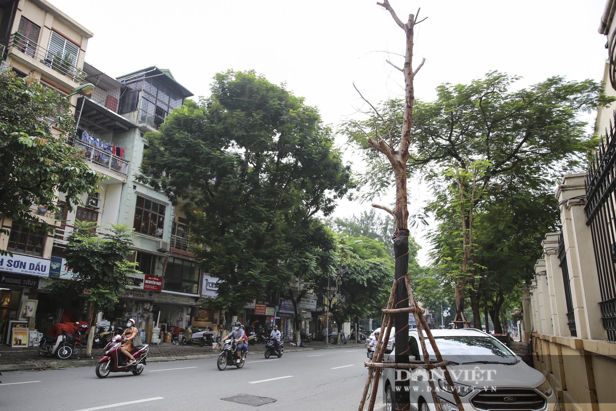 Hà Nội: Nhiều cây xanh trồng mới có dấu hiệu chết khô  - Ảnh 13.