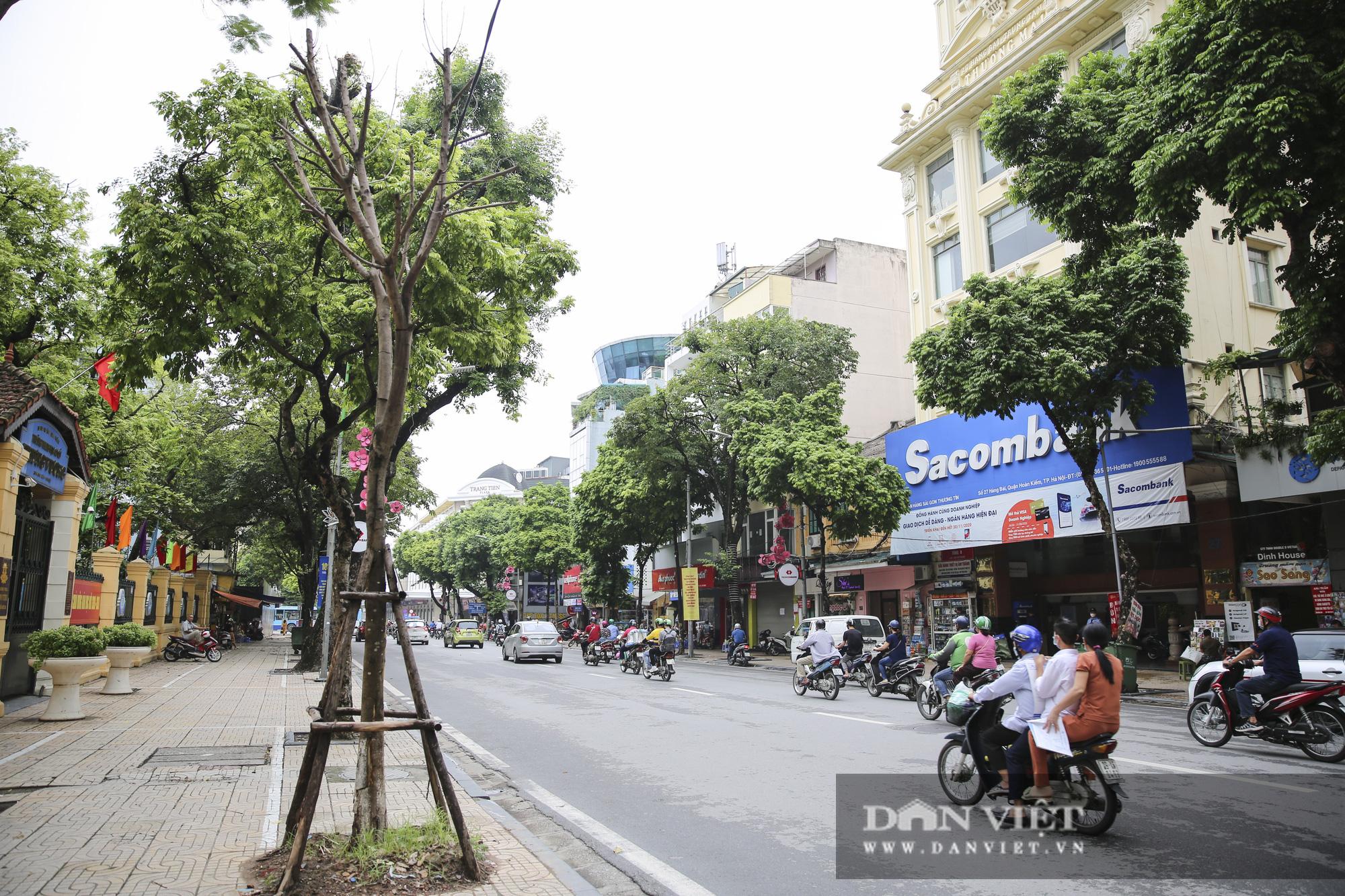 Hà Nội: Nhiều cây xanh trồng mới có dấu hiệu chết khô  - Ảnh 6.