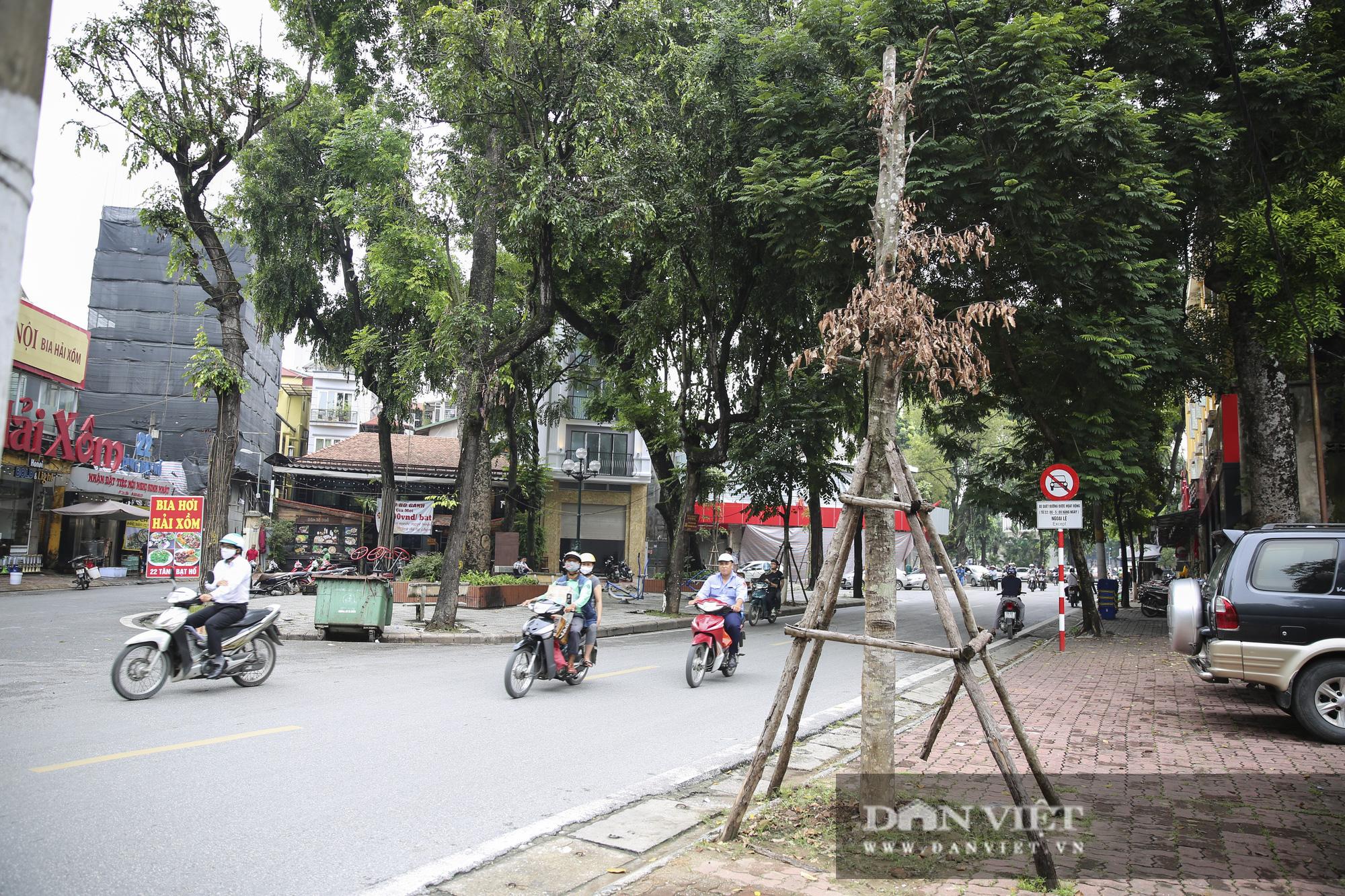 Hà Nội: Nhiều cây xanh trồng mới có dấu hiệu chết khô  - Ảnh 8.