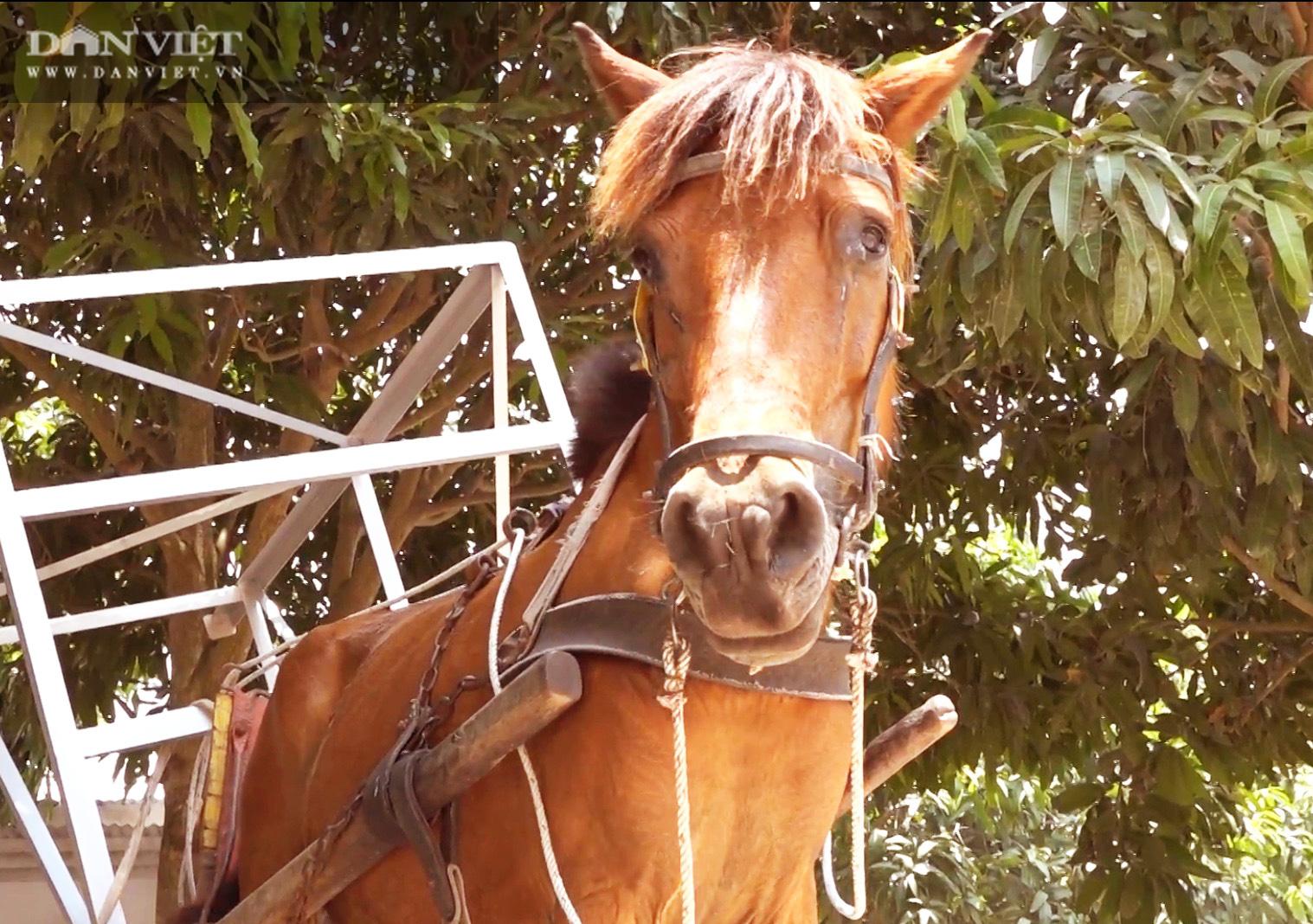 Những chiếc xe ngựa cuối cùng của vùng Bảy Núi - Ảnh 3.