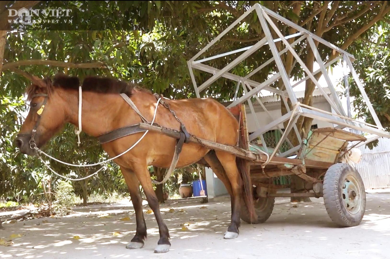 Những chiếc xe ngựa cuối cùng của vùng Bảy Núi - Ảnh 2.