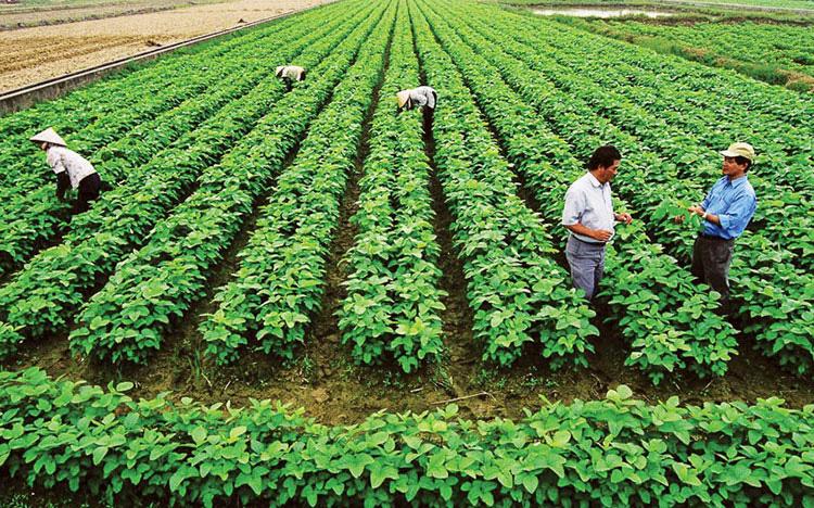 Trường hợp nào cần xác nhận hộ trực tiếp sản xuất nông nghiệp? - Ảnh 1.