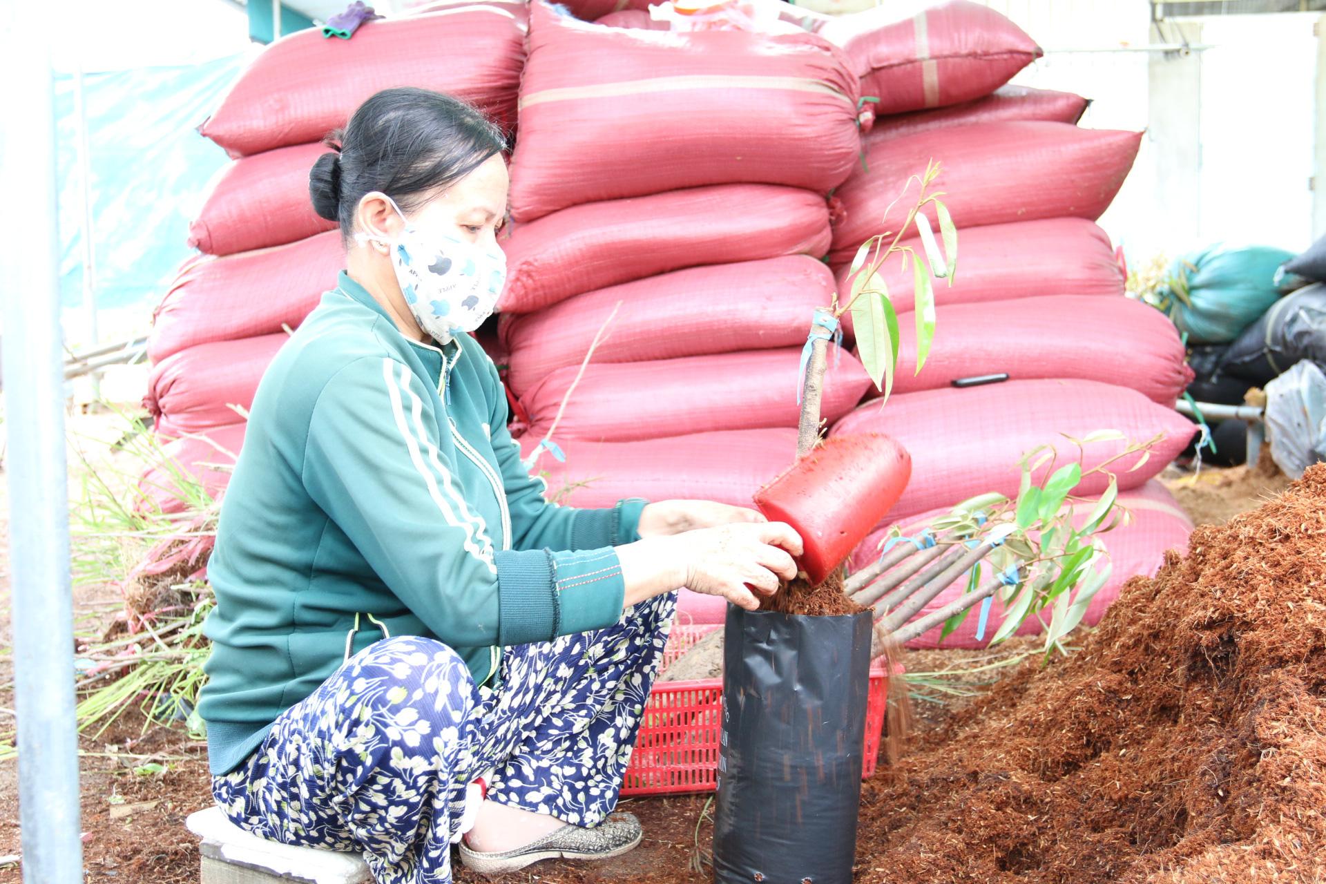 Agribank đồng hành cùng làng nghề sản xuất cây giống  - Ảnh 3.