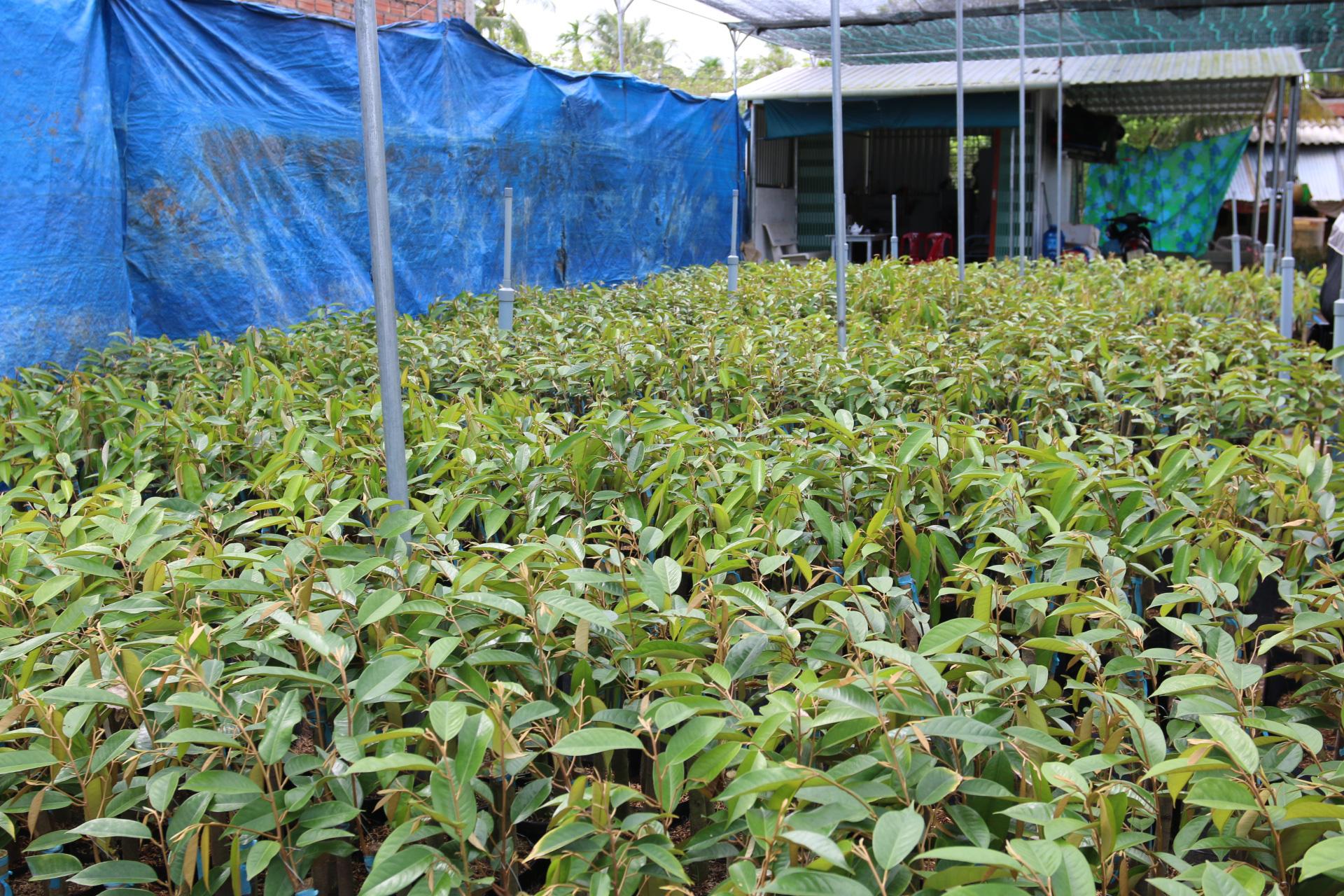 Agribank đồng hành cùng làng nghề sản xuất cây giống  - Ảnh 2.