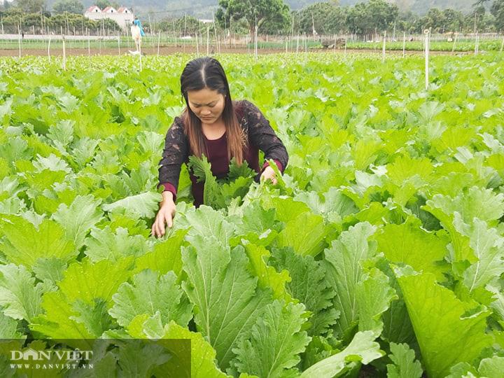 Sơn La: Khởi công xây dựng trung tâm chế biến rau, quả - Ảnh 7.