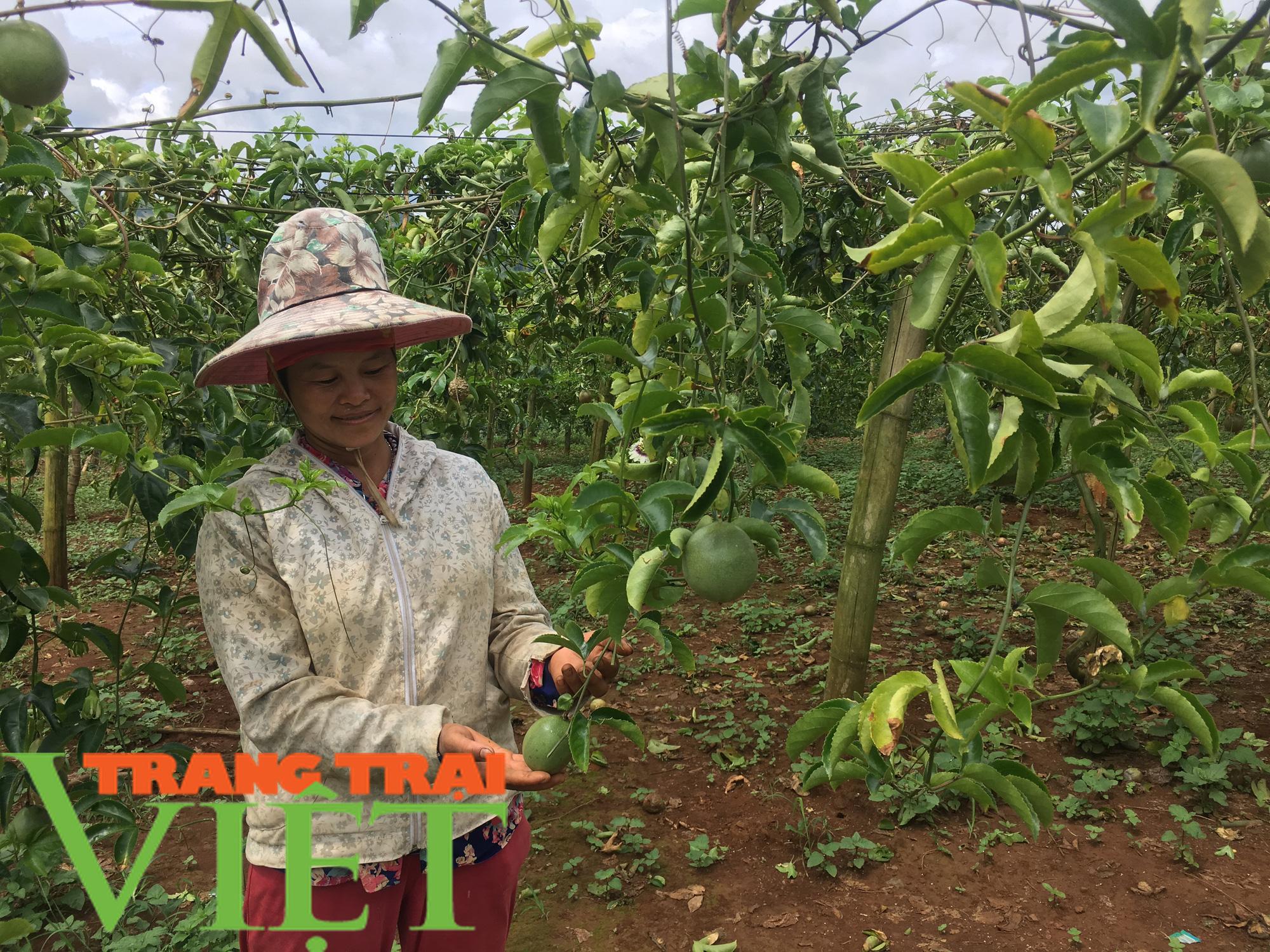 Sơn La: Xây dựng trung tâm chế biến rau, quả tại huyện Mai Sơn - Ảnh 8.