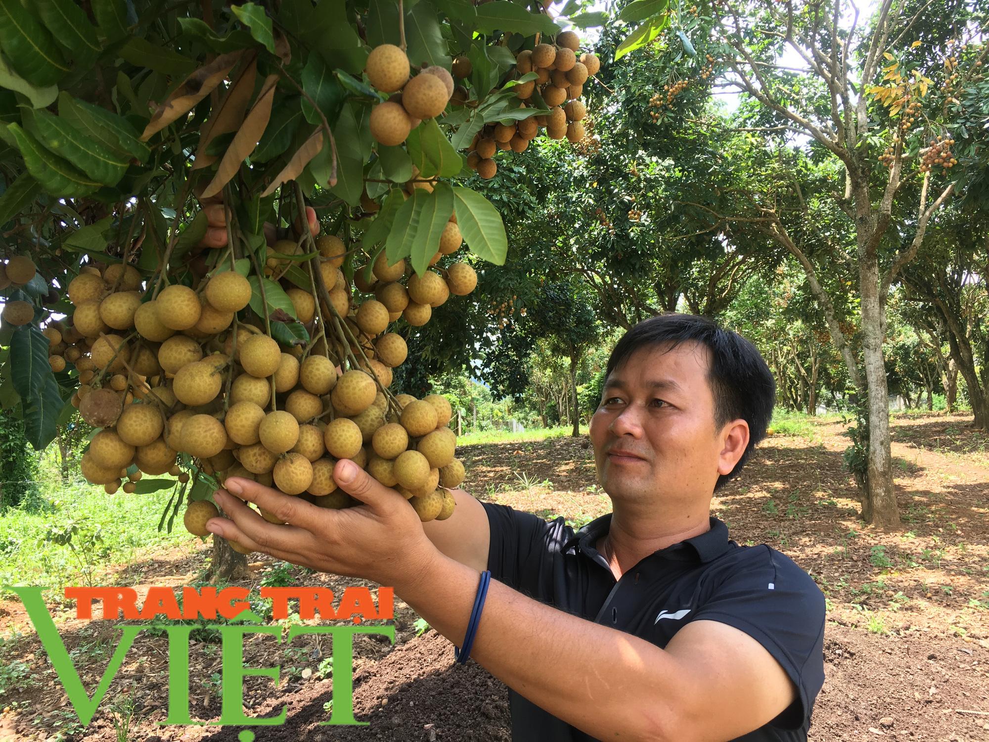 Sơn La: Xây dựng trung tâm chế biến rau, quả tại huyện Mai Sơn - Ảnh 6.
