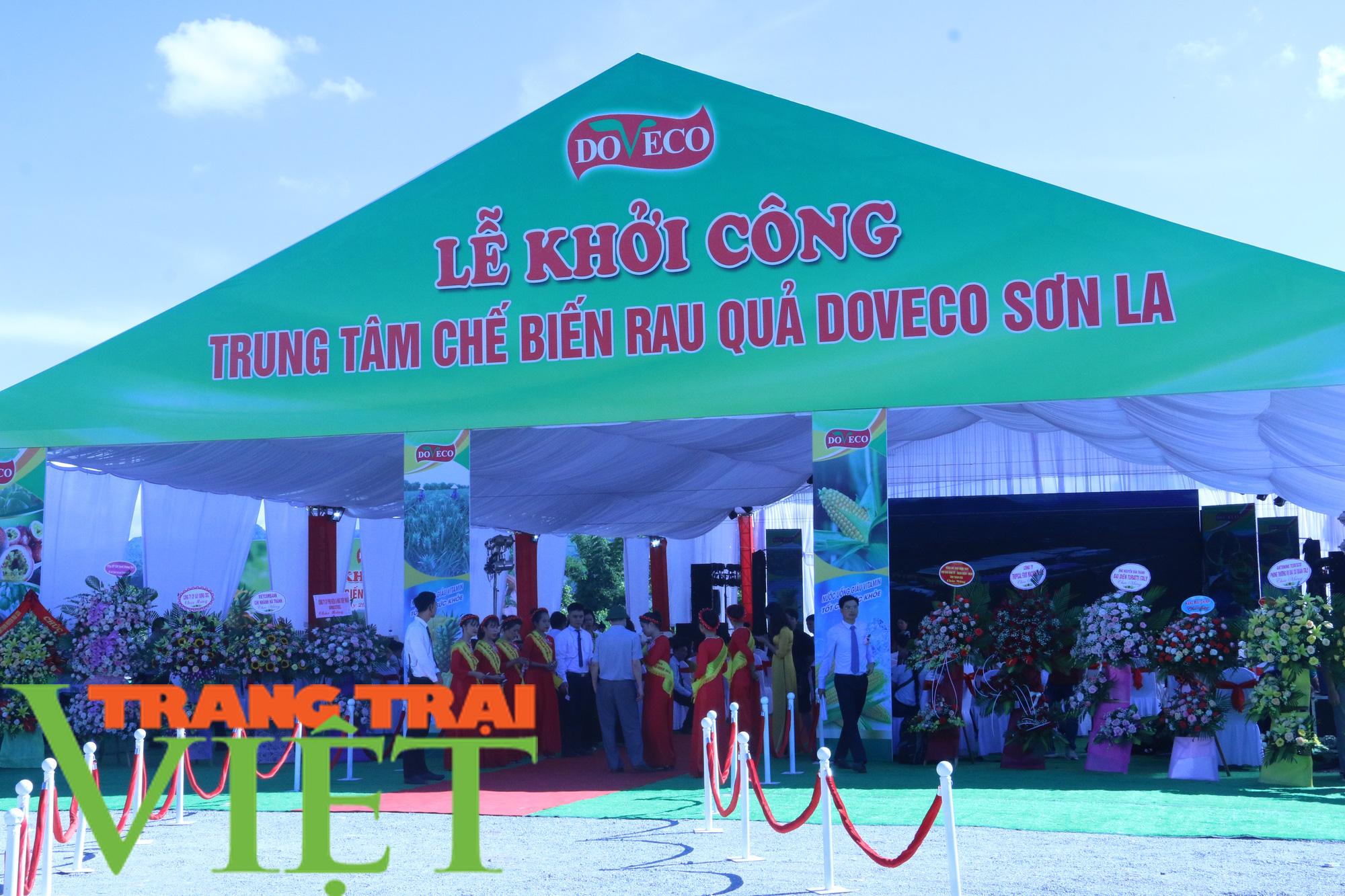 Sơn La: Xây dựng trung tâm chế biến rau, quả tại huyện Mai Sơn - Ảnh 1.
